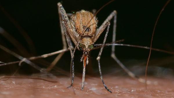teebaumöl gegen mücken - Mücken Im Schlafzimmer